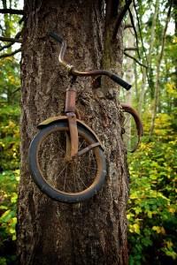 una bicicleta incrustada en un árbol-2