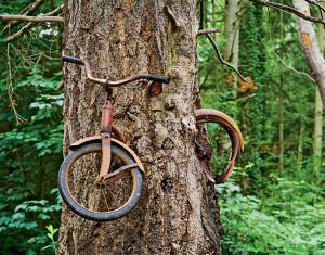 una bicicleta incrustada en un árbol