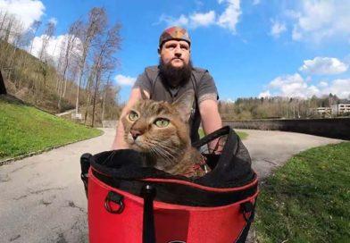 Nala: la gata que viaja por el mundo en bicicleta